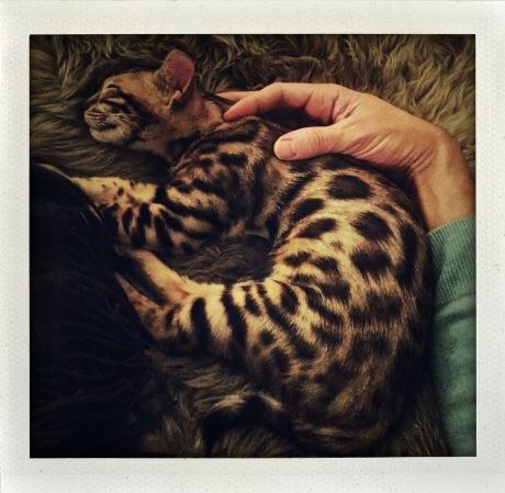 Permission to catnap.